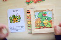 Life Cycle of a Pumpkin (Preschool Edition)