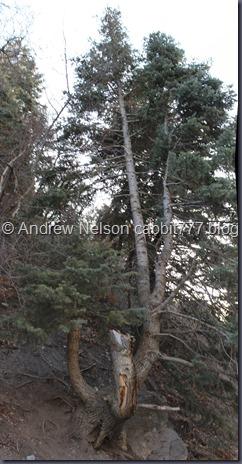 Battle Creek Tree