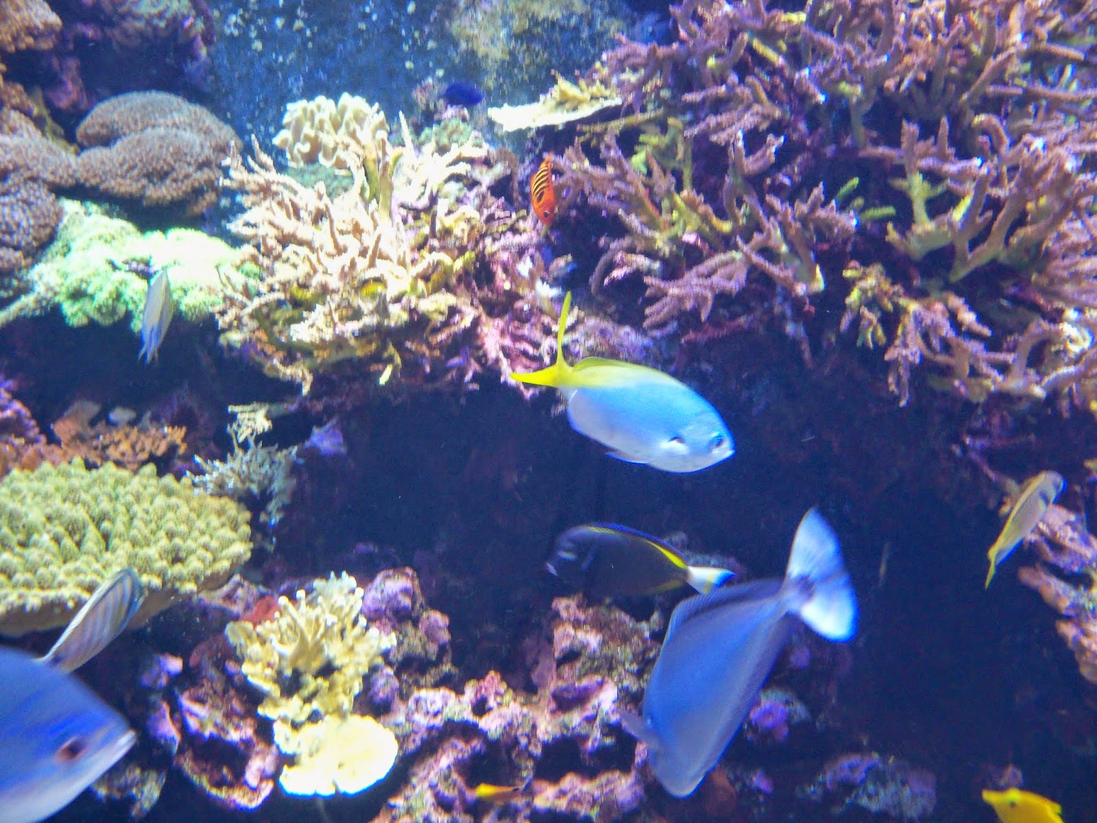 Downtown Aquarium - 116_3991.JPG