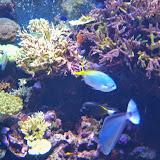 Downtown Aquarium - 116_3991.JPG