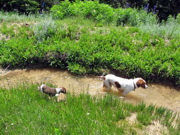 Boulder playing follow the leader