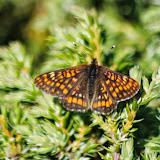 LepidopteresSilsMariaJuillet2013