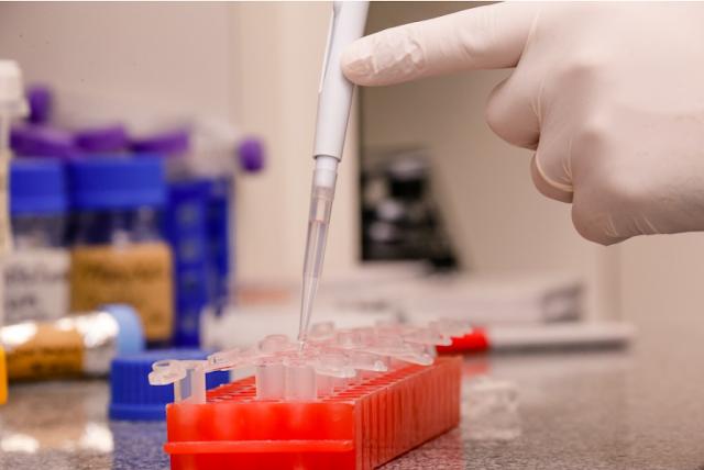 Análise de DNA - Cecília Bastos / USP Imagens