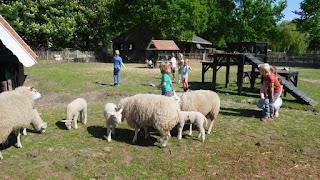 de Beertjes naar de kinderboerderij