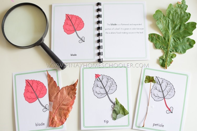 Montessori Inspired Parts of a Leaf Description Cards