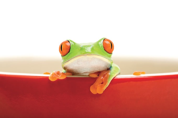 [frog-fable-brought-to-boil%5B4%5D]
