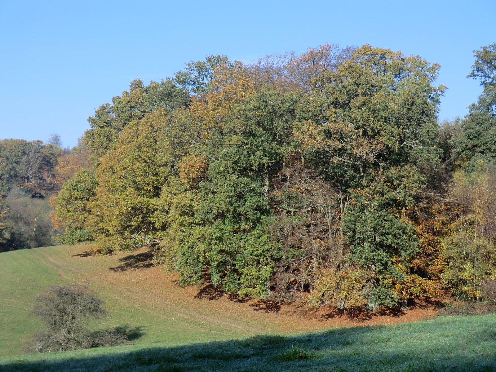 CIMG0276 Wealden view near Chiddingstone Hoath, autumn