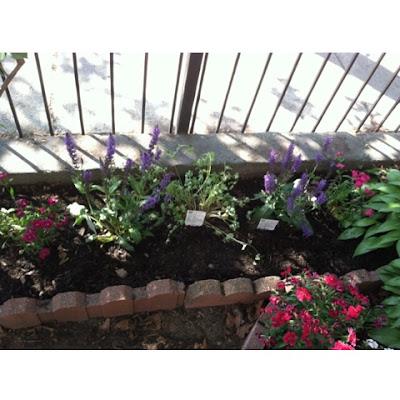perennials in a small urban garden