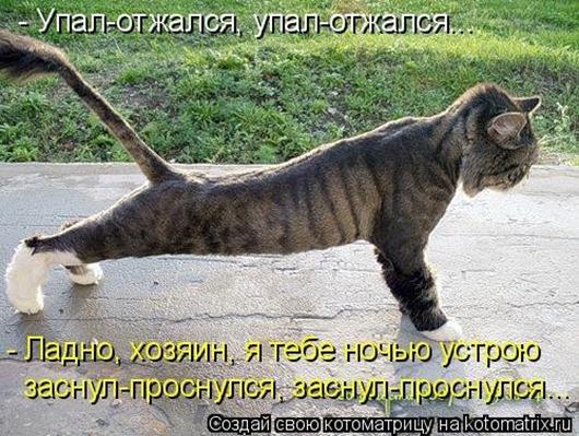 1428677925_kotomatricy-36
