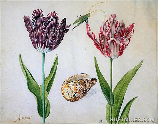 Two_Tulips