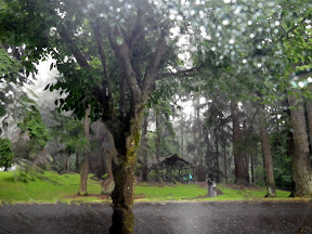 LOVE that Oregon rain!