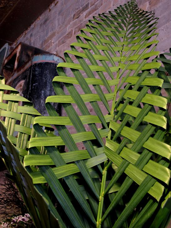 How To Weave A Basket From Banana Leaves : Sweetpea s palm weaver