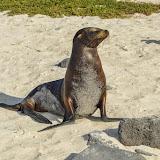 galapagos - Galapagos_FB-70.jpg