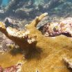 Buck Island Reef - IMGP1238.jpg