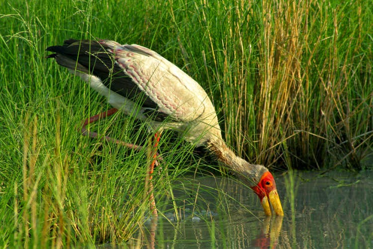 Birdwatching in Okavango Delta