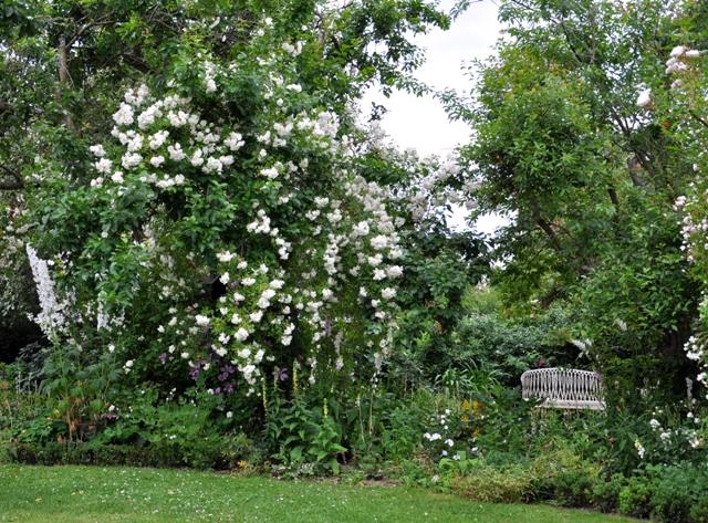 Den frodige have: det hvide bed