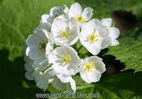 Mỏng manh hoa trắng chuyển trong suốt khi trời mưa - Thiết kế phòng ngủ