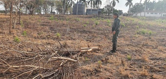 Sitiante é multado em R$ 64 mil por cortar 215 árvores em Guararapes