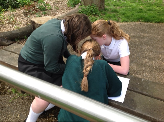 6tk Have Been Collecting Bugs To Create Branching Tree Diagrams In