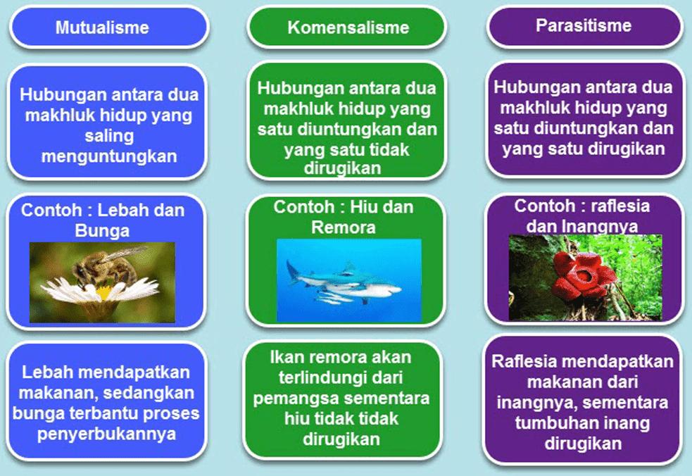 Kunci Jawaban Halaman 85, 86, 87, 89, 90 Tema 5 Kelas 5