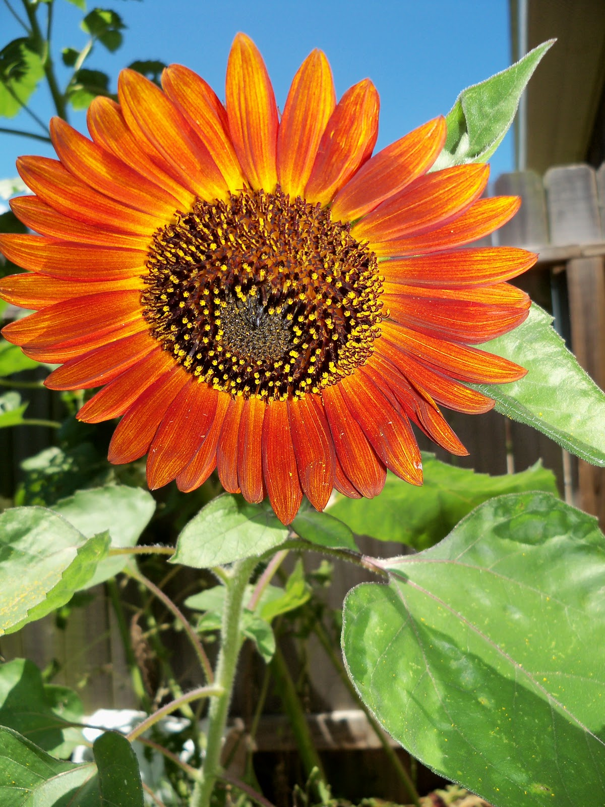 Gardening 2010, Part Three - 101_4509.JPG