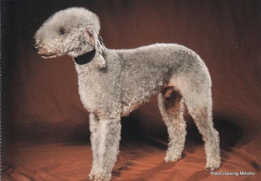 Beautiful DOGS (13).jpg