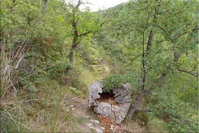 Restos de un tocón en medio del sendero