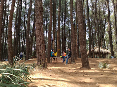 Pinus Pengger