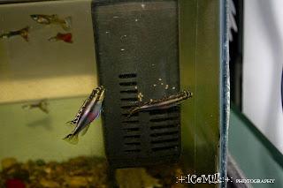 Акуурамтай загас /Photography by Icemilk/