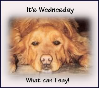 [its-wednesday-what-can-i-say-dog-gra%5B1%5D]
