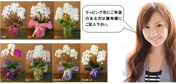 胡蝶蘭のラッピング色見本