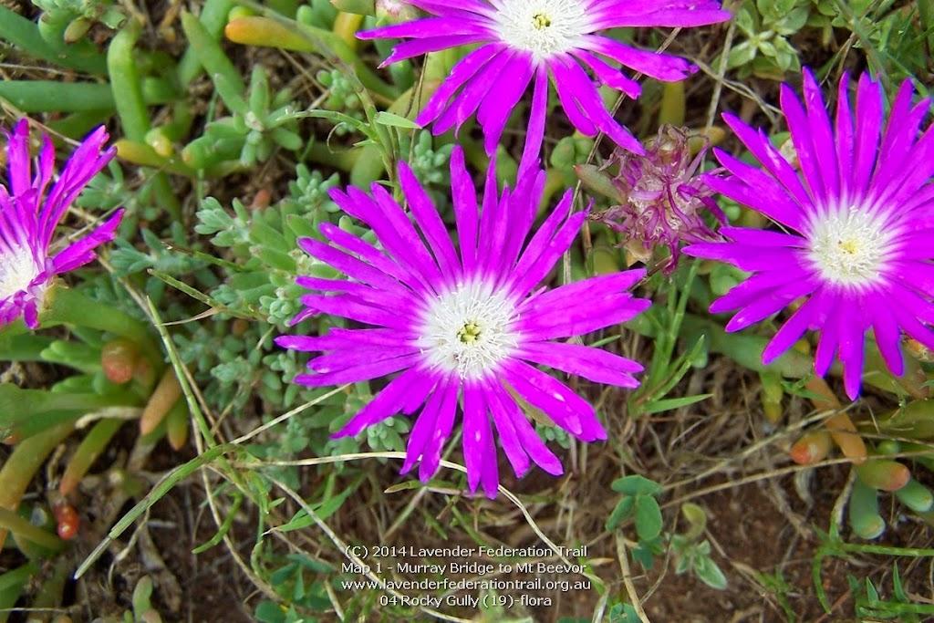 04 Rocky Gully (19)-flora