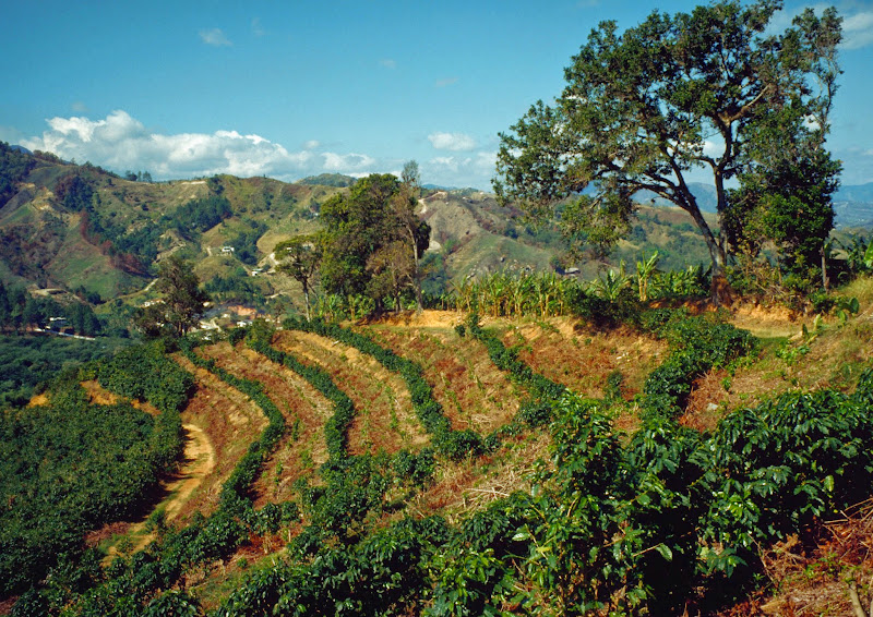 coffee plantation puerto rico