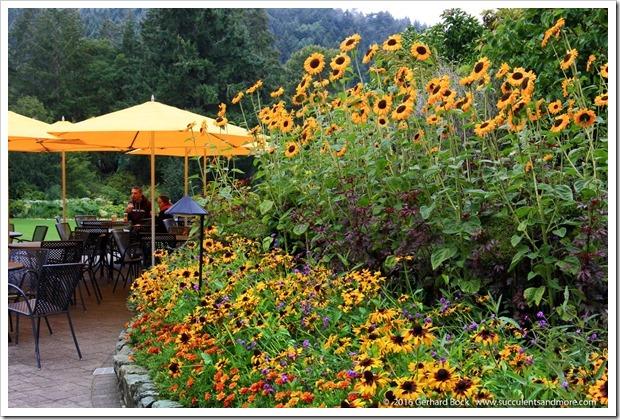 160906_Butchart_Gardens_0079