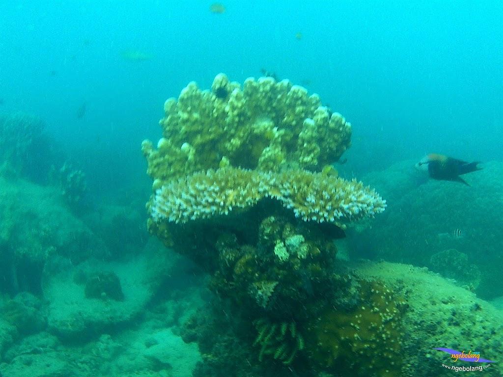 family trip pulau pari 090716 GoPro 32