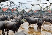 Toraja Utara Hadirkan Pasar Ternak Terbesar di Indonesia, Ini Kata Mentan SYL