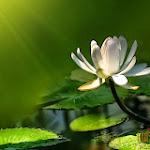 Flower 024_1280px.jpg