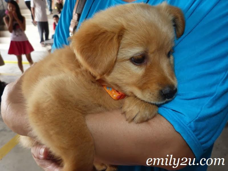 ISPCA Pet Adoption Programme