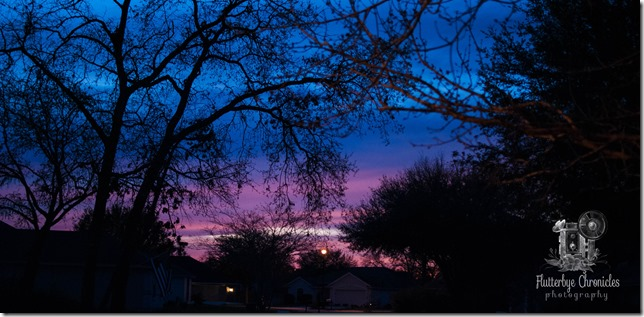 Wordless Wednesday Pink Sunset (©Jenny @ Flutterbye Chronicles)