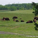 05-11-12 Wildlife Prairie State Park IL - IMGP1591.JPG