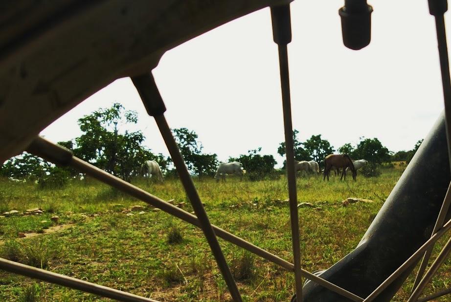 Brasil - Rota das Fronteiras  / Uma Saga pela Amazônia - Página 3 20140909_163053