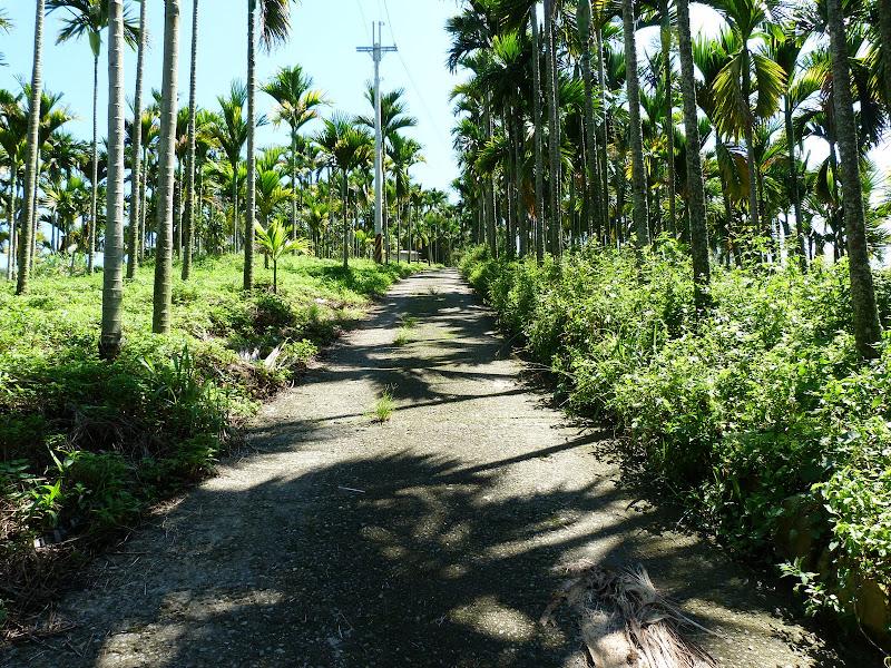 des centaines d'hectares de Bin lang