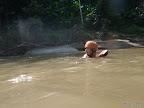 Chiang Mai - da schwimmt er