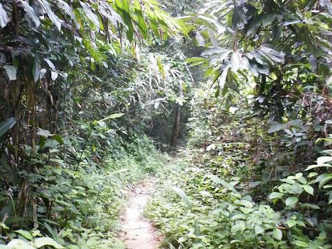 ジャングルの中を進む