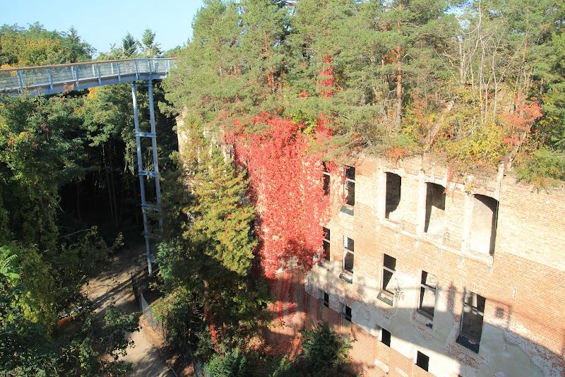 Der Baumkronenpfad Beelitz-Heilstätten