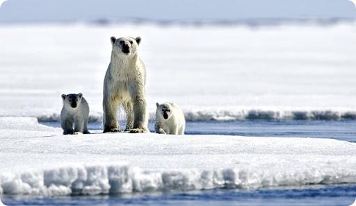 Greenpeace-pide-tu-firma-para-salvar-el-artico-y-abandonar-la-era-del-petroleo