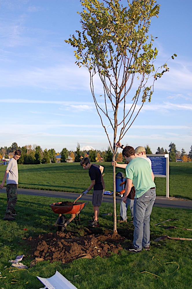 Tree Planting November 2010 - DSC_4540.JPG