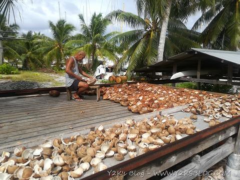 Si lavorano i cocchi per la copra - Apataki