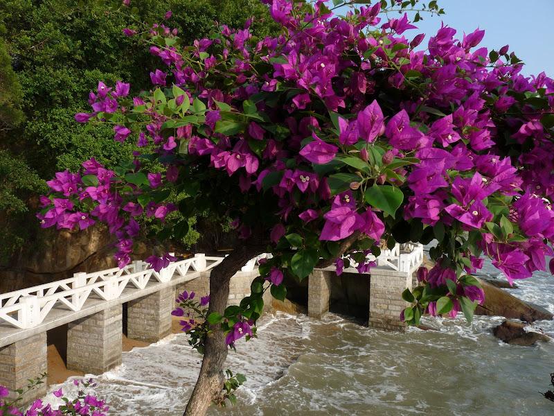 Chine, Fujian. Gulang yu island, Xiamen 2 - P1020179.JPG