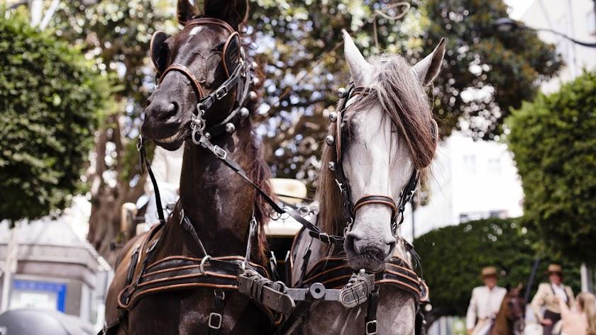 Inaguracion paseo caballos y carruajes